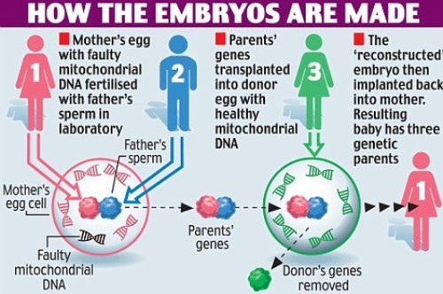 a891c3b4d166 How Designer Babies are Made. Child-with-DNA-of-3-parents-Designer-Babies-